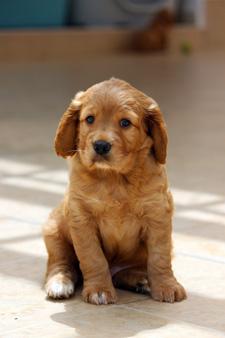 Reiki, energía de luz para las mascotas