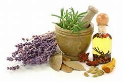 Plantas medicinales para tu salud