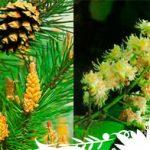 Esencias Florales descubiertas por el Dr. Bach