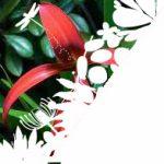 Flor de Lys
