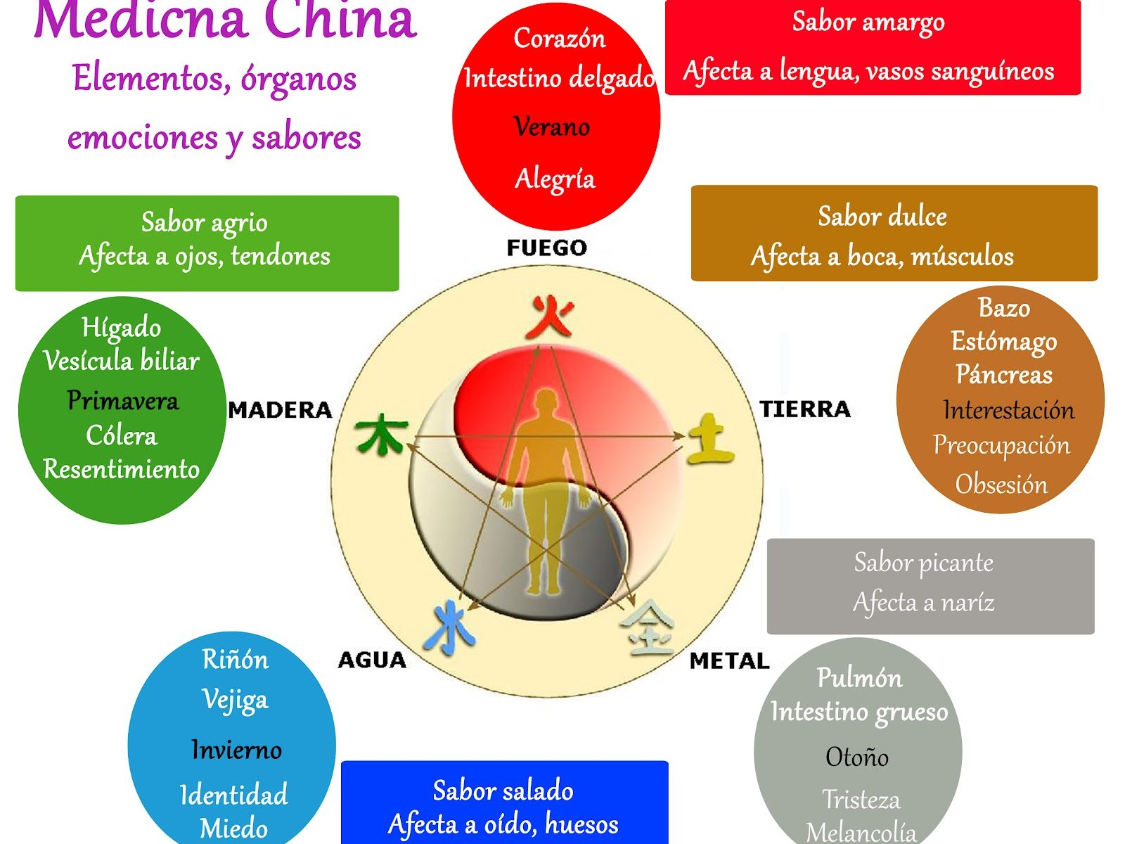 Relación órgano/emoción según la Medicina China | Albada Natural